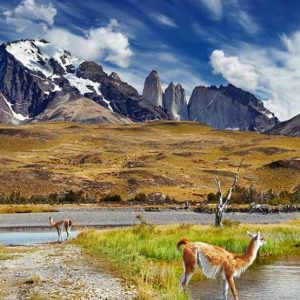 Excursion d'une journée complète au parc national de Torres del Paine - 90