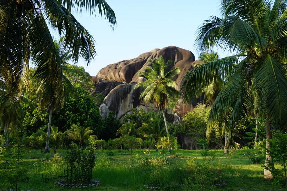 nature luxuriante seychelles