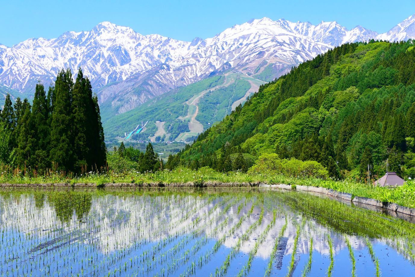 青鬼地区、水田に映る北アルプス。白馬、長野、日本。5月下旬。