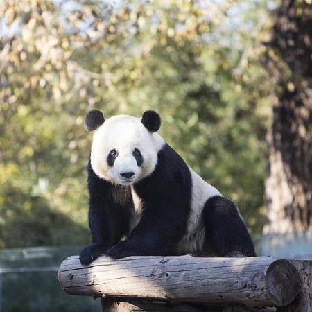 Visite du Zoo de Pékin