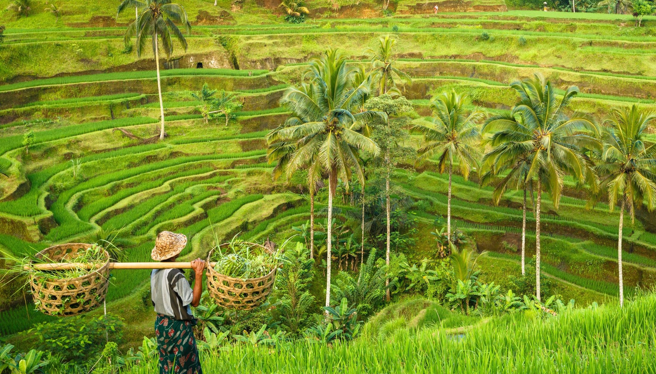 une rizière avec un homme à bali