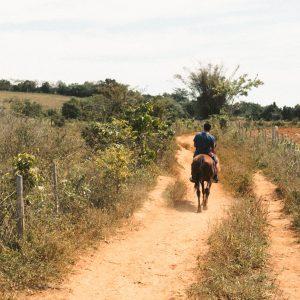 Randonnée vigneronne à cheval