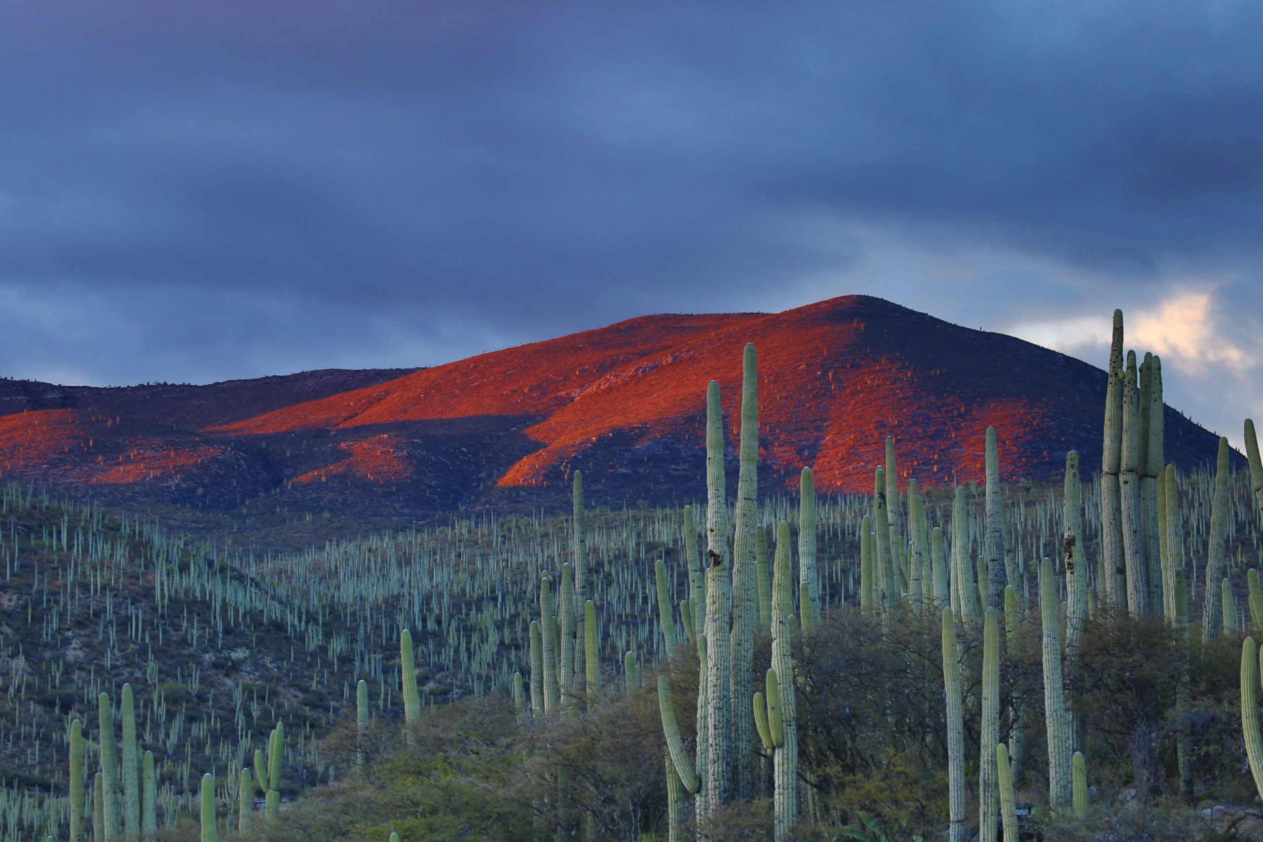 désert Mexique