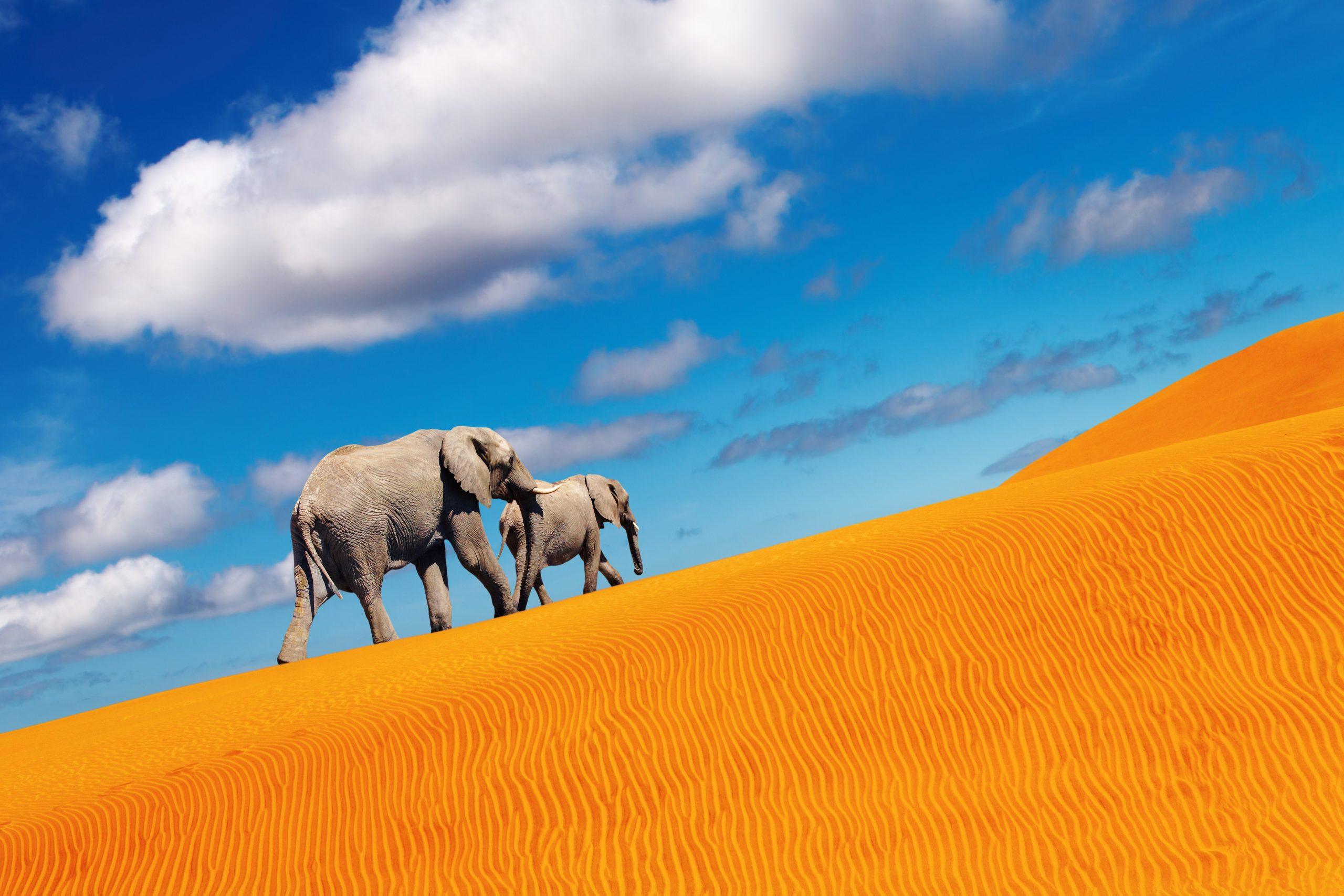 désert éléphant namibie