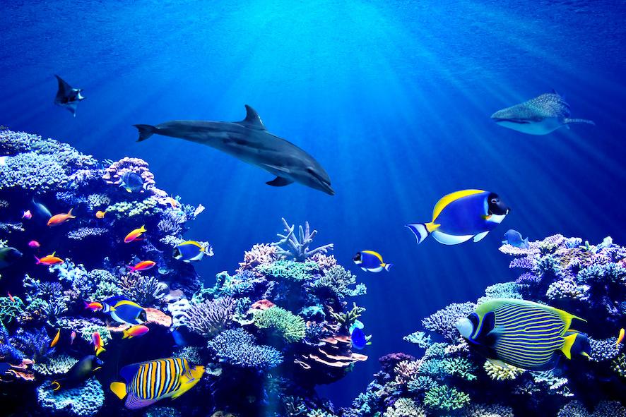 faune sous marine Maldives