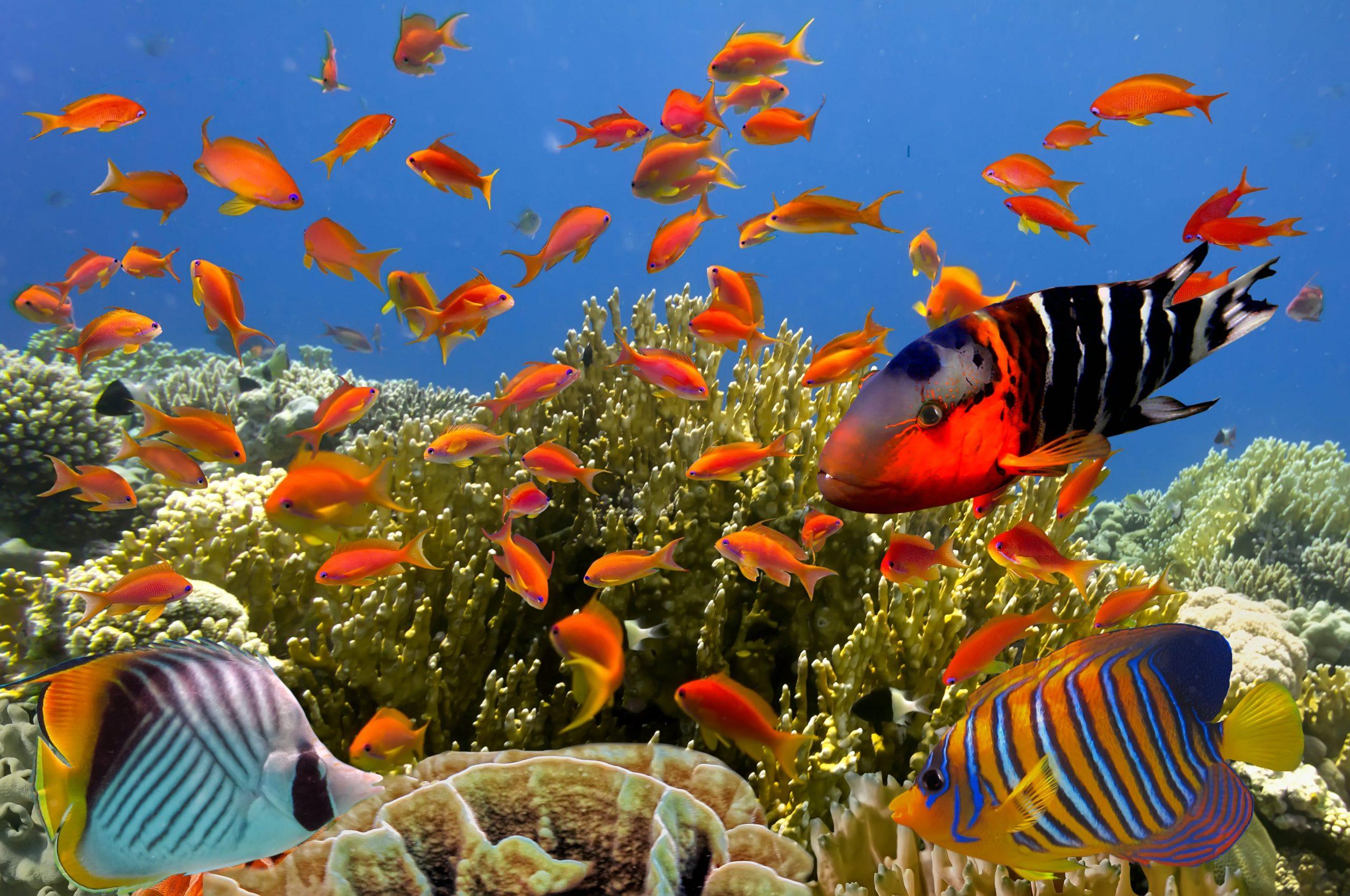 poissons seychelles