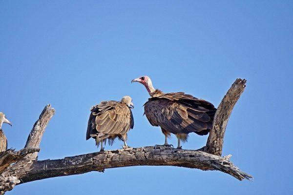 Une entrée au Parc National de Chobe
