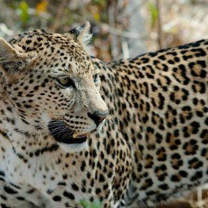 Une participation pour un safari en 4x4 dans la réserve de Moremi