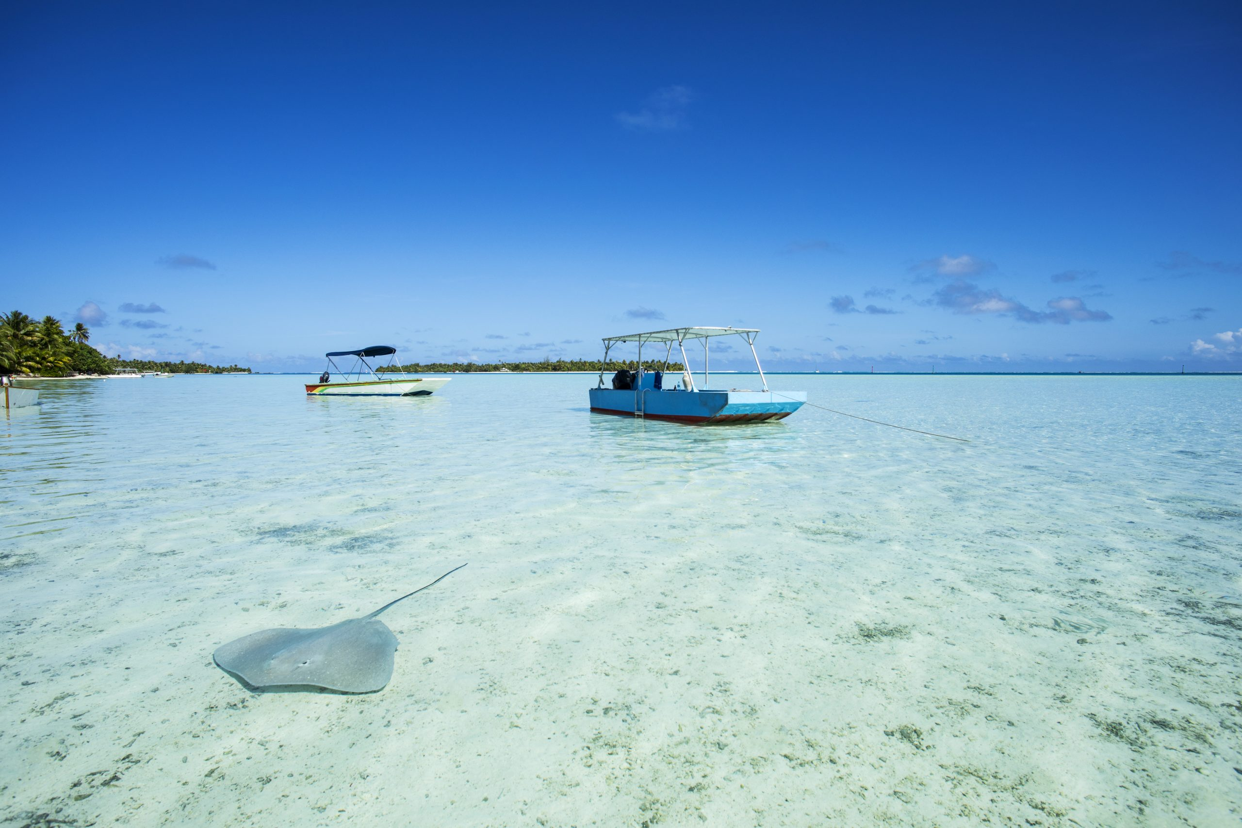 bateaux avec un poisson raie dans un lagon en polynésie