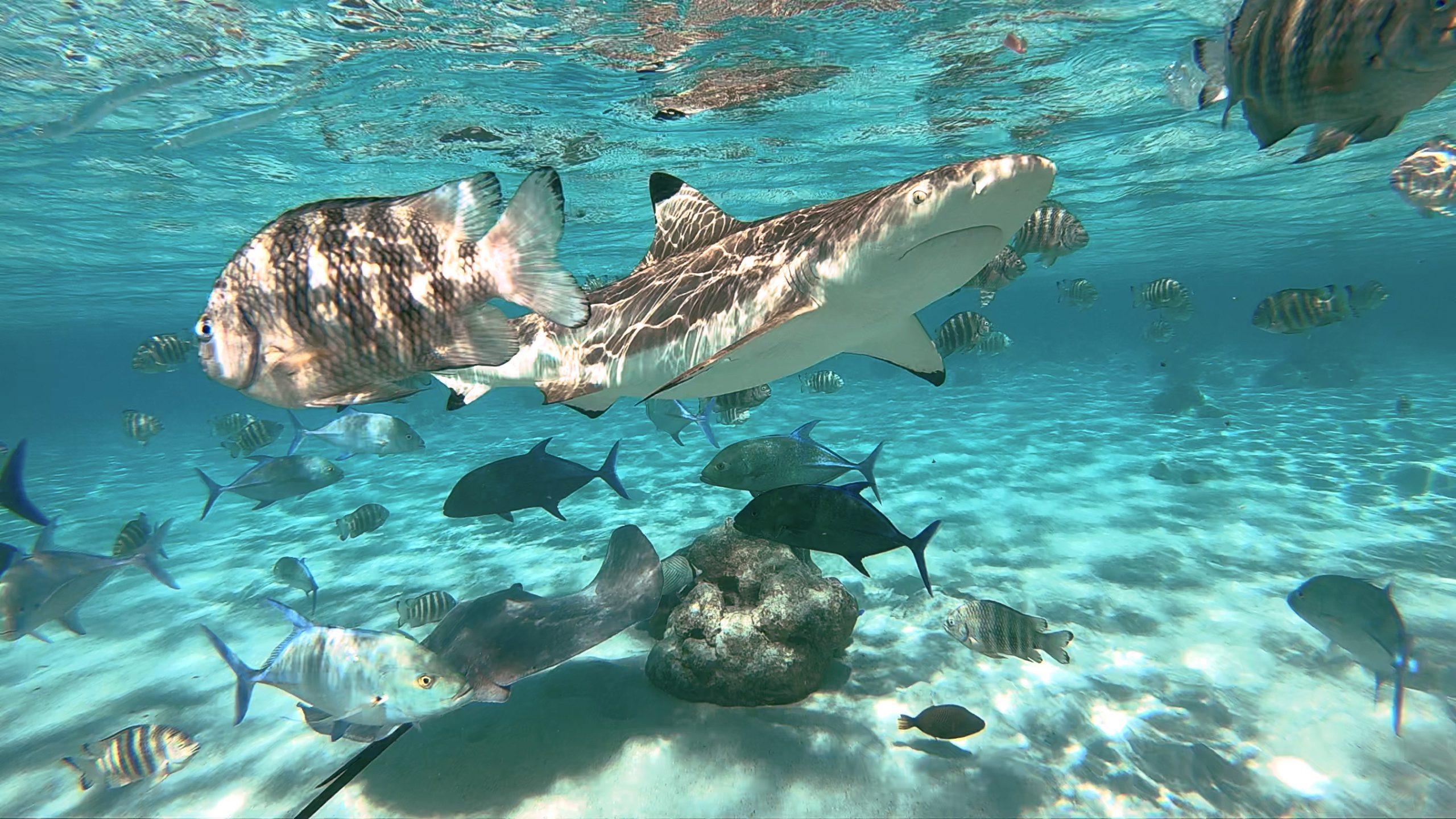 plongée sous marine Polynésie française