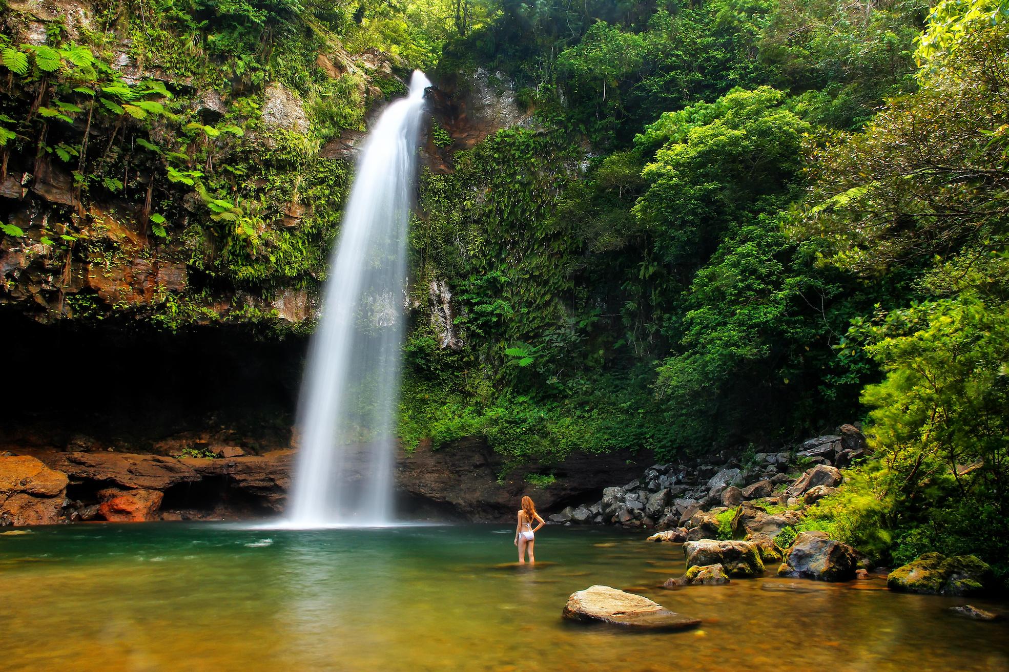 forêt chutes fidji