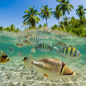 fonds marins fidji