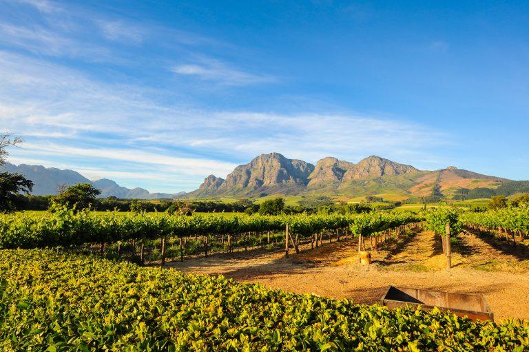 région des vignobles afrique du sud